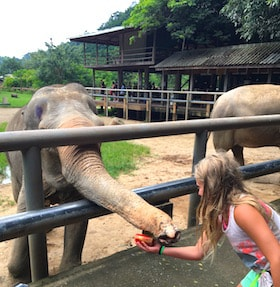 Getting personal with elephants Thailand