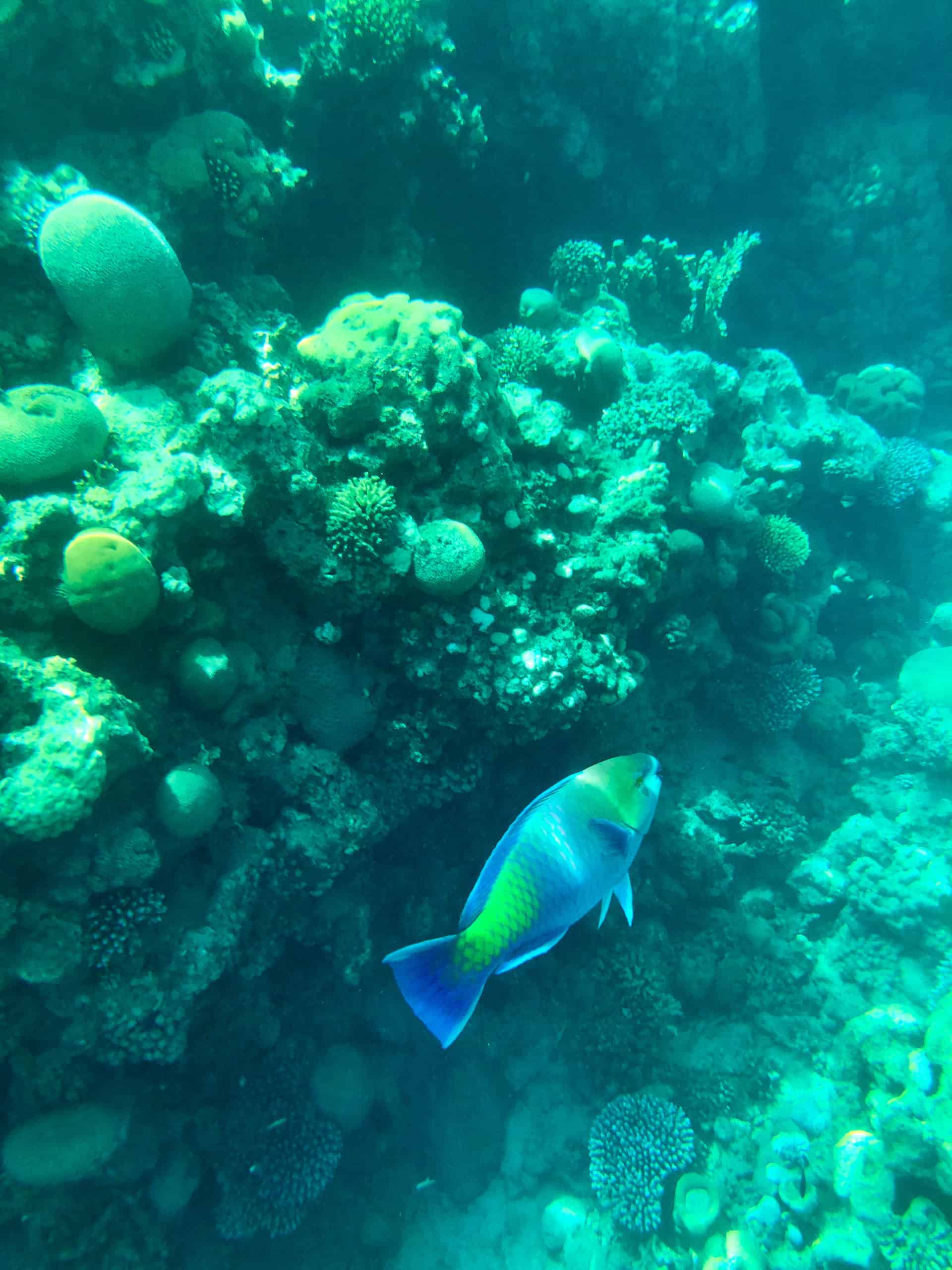 Tips and Takeaways from Snorkeling in Eilat Israel - Five Family Adventurers