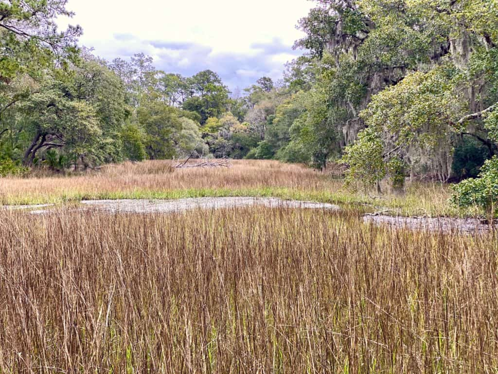 grassy marsh lands of Lowcountry